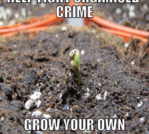 Help Fight Organised Crime