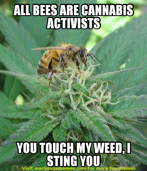 bee a cannabis activist or i sting you