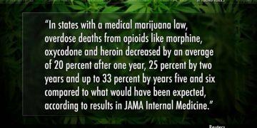 marijuana decreases overdoses