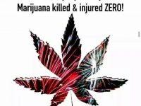marijuana safer than fireworks