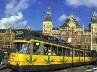 amsterdam tram cannabis tour