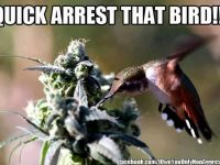 Quick, arrest that bird pot plant