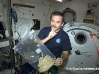 Colonel Chris Hadfield high marijuana