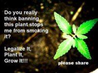 banning marijuana stop users