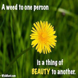 A Thing Of Beauty weed meme