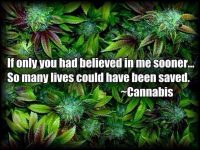 believe in cannabis