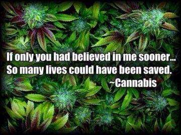 believe in cannabis