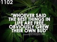 best things in life free grow your own weed