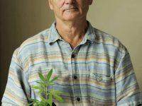 bill murray marijuana plant