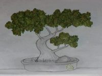 bonsai weed tree