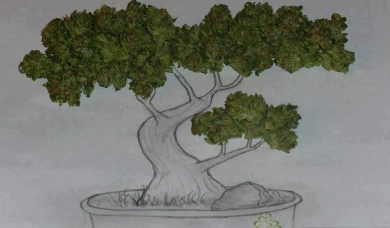 Bonsai Weed Tree Art
