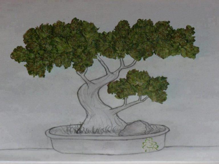 bonsai weed tree
