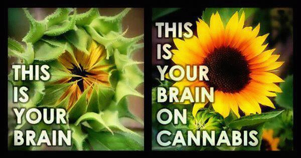 This Is Your Brain On Cannabis