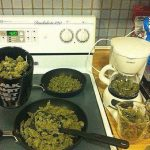 breakfast of champions weed