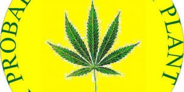 probably the best plant world cannabis