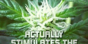 marijuana klls brain cells
