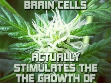 marijuana klls brain cells