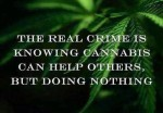 real crime cannabis drugs