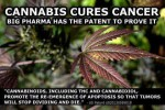 Cannabis Cures Cancer meme