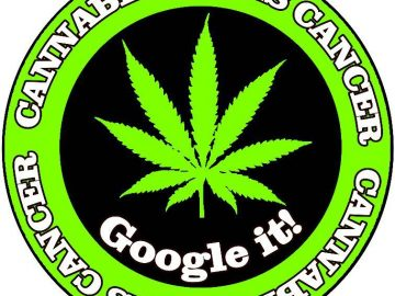 cannabis kills cancer sticker
