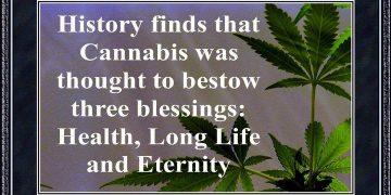health long life marijuana plant