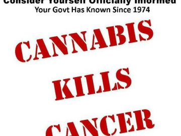 cannabsi kills cancer