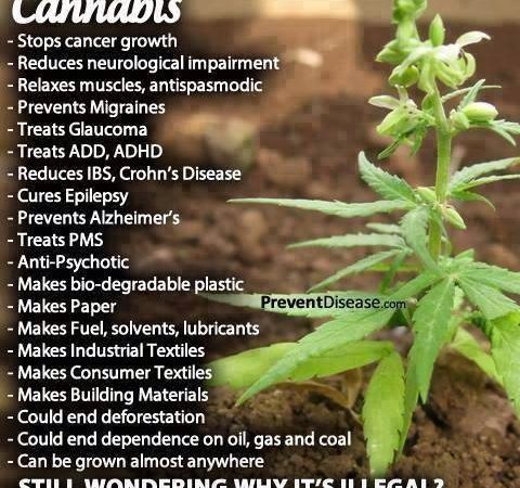 Cannabis, why is it illegal?