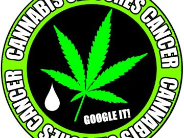 Cannabis oil cures cancers Google it sticker