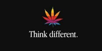 cannabis pride
