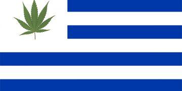 uruguay cannabis