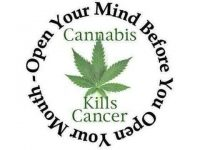 marijuana kills cancer open mind