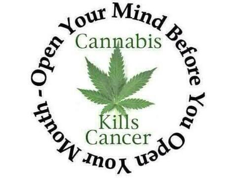 Marijuana Kills Cancer – Open Your Mind