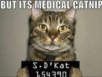 But it's medical catnip meme
