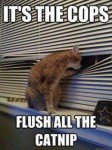 It's The Cops, Flush The Catnip meme