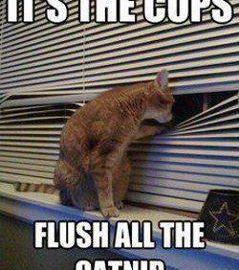 It's The Cops, Flush The Catnip meme