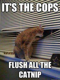 It's The Cops, Flush The Catnip
