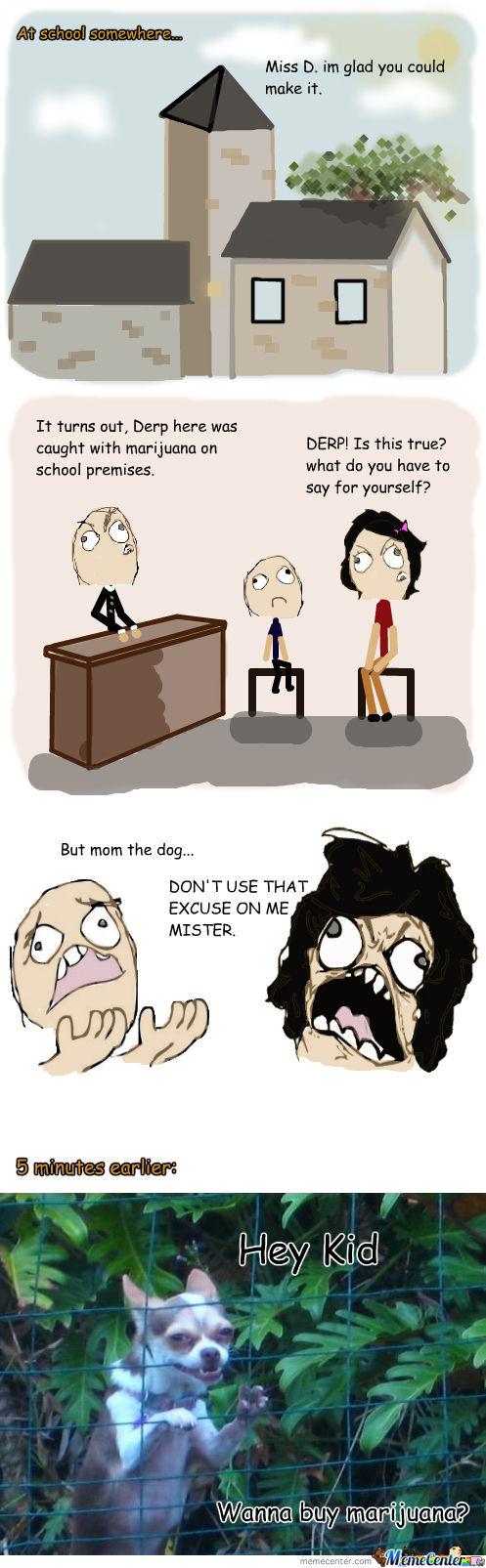 school drug dealing dog