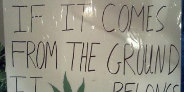 cannabis comes from the earth