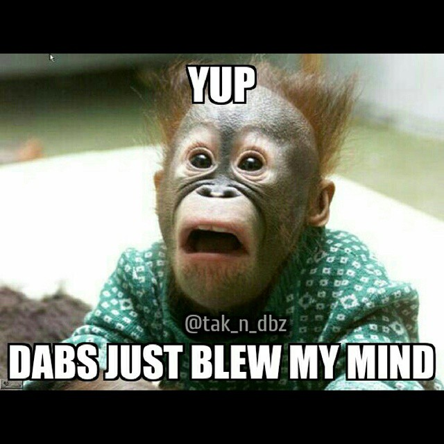 dabs blew my mind monkey