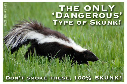 dont smoke skunk dagers weed