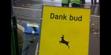 london hyde park 420 meme dank