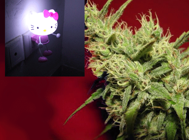 Grower Nails One Pound of Kind From Hello Kitty Nightlite