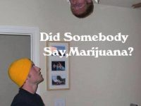 Did someone say marijuana