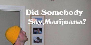 Did someone say marijuana