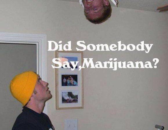 Did someone say marijuana ?
