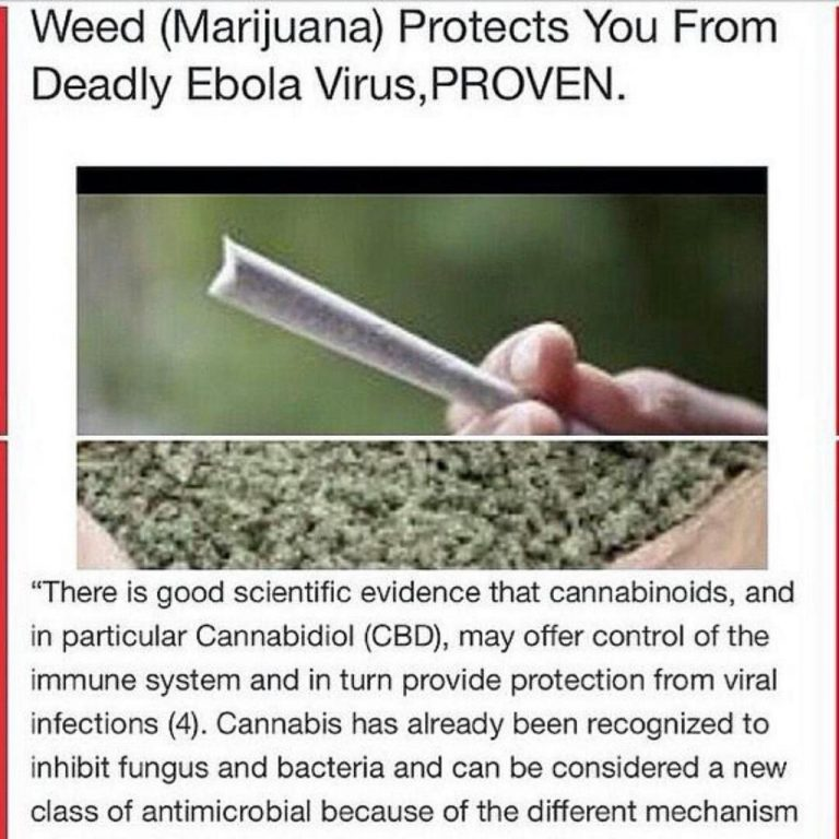 cannabis protects ebola virus