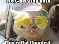 bat country fear and loathing las vegas