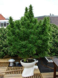 pot growing in pot funny pic
