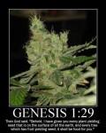 Genesis 1:29 bible marijuana