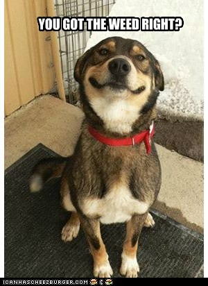 You got the weed right stoned smiling dog